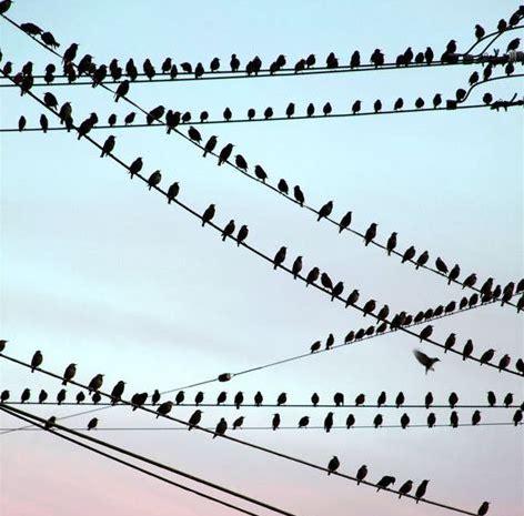 Image d'oiseau sur des cables électrique